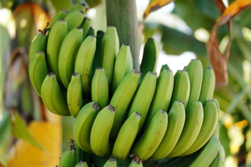 香蕉.jpg