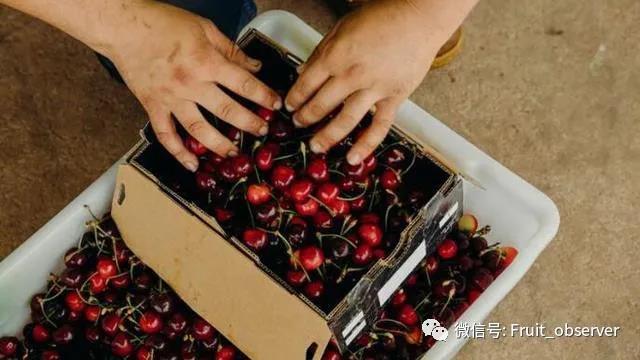 澳洲樱桃.jpg