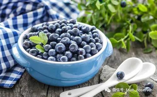 蓝莓4.jpg