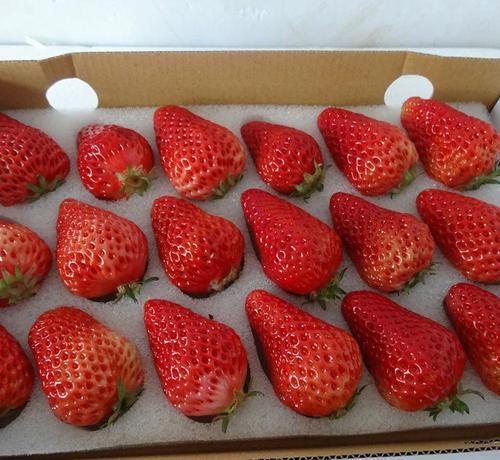 丹东草莓.jpg