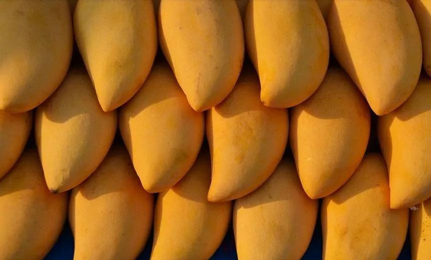 芒果6.png
