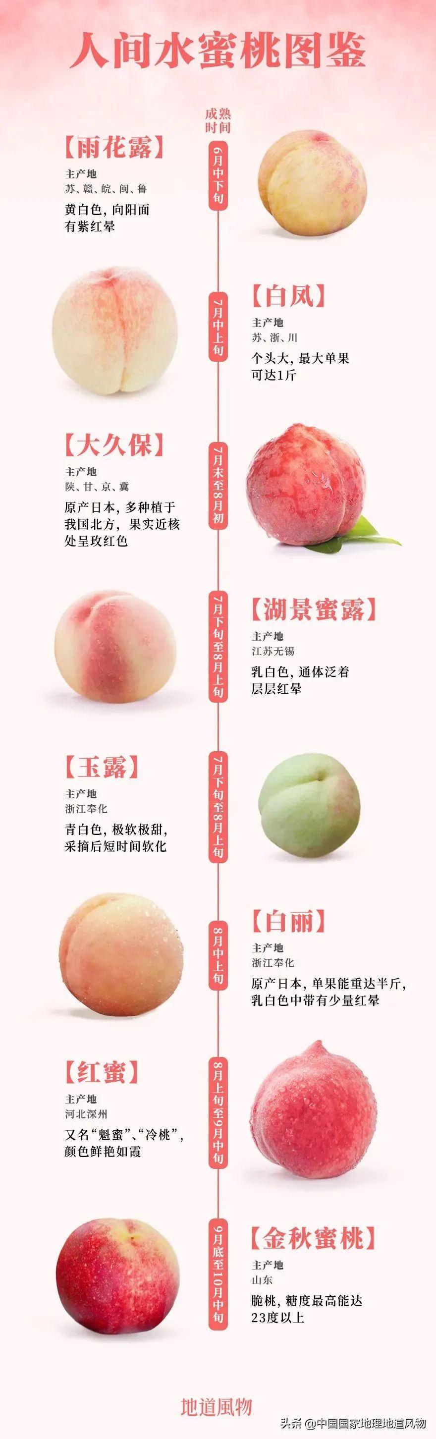 桃子图.jpg