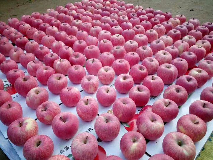 苹果14.jpg