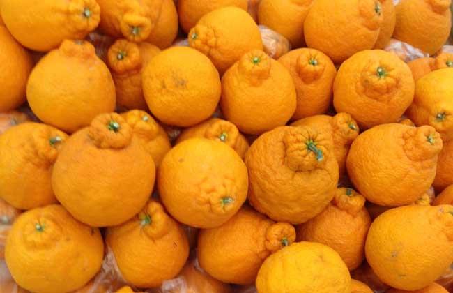 丑橘.jpg