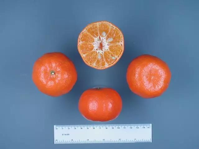 丹西橘.jpg