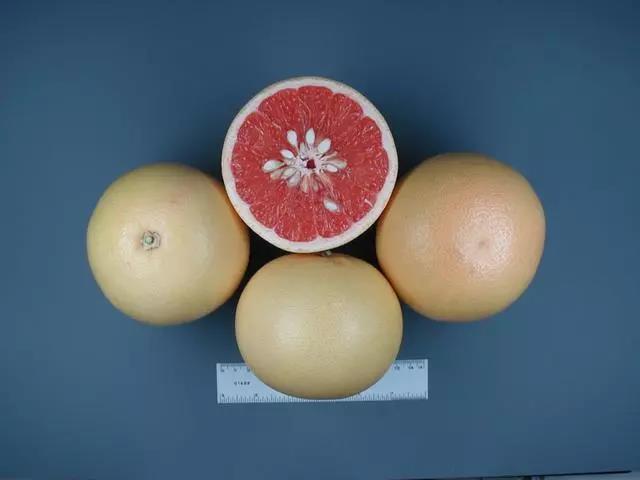 哈德逊葡萄柚.jpg